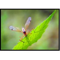 Wholesale 52918-63-5 Systemic Pesticides For Mosquito Control 2.5% Deltamethrin WP from china suppliers