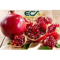 Wholesale Zakuro;beverages and cakes; Beauty effect, Oraganic Food Ingredients, Pomegranates Powder, Curing stomach problems from china suppliers