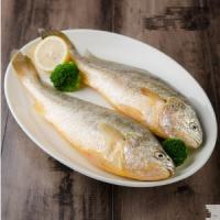 Buy cheap yellow croaker wholesale,yellow croaker fish maw,yellow croaker frozen fish. from wholesalers