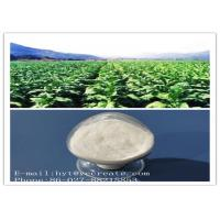 Wholesale Solanesol Pure Natural Plant Extracts CAS 13190-97-1 Pharmaceutical Grade from china suppliers