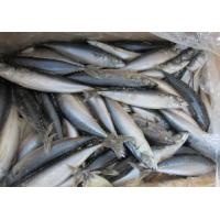 Wholesale New Landing Grade A Quality Frozen Whole Round Pacific Mackerel Fish Food for Sale. from china suppliers