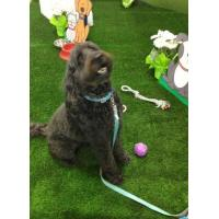 Wholesale Dog & Pet artificial synthetic grass from china suppliers