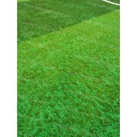 Quality Soccer Synthetic Grass Infill TPV Eco Rubber Granulate Heat Resistance for sale