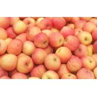 Wholesale Juicy Red Fresh Fuji Apple , Red Delicious Apples With Suitable Sour / Sweet from china suppliers