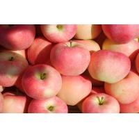 Wholesale Natural Seasonable Fresh Organic Fuji Apple Vitamin C , Zinc Anti-Cancer, fruit extremely resistant storage from china suppliers