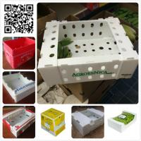 Wholesale 5kgs 10lbs pp corflute coroplast vegetable fruit packaging box from china suppliers