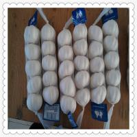 Wholesale Chinese New Crop White Garlic Pure Shandong fresh Garlic from china suppliers