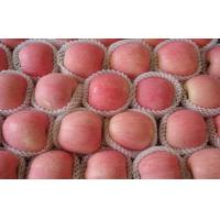 Buy cheap 0.25 Kg 8cm Delicious Red Fuji Apple No Spots With Complete Body from wholesalers