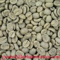 China Green Coffee Bean Extract herbal extract  powder on sale