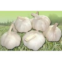 Buy cheap Fresh Pure White Garlic 6.0-6.5cm from wholesalers