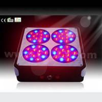 Wholesale Apollo LED Grow Light No. 4 from china suppliers
