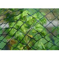 Wholesale Green HDPE Plastic Anti Bird Nets , 33gsm 16mm Diamond Bird Protection Safety Netting Mesh from china suppliers