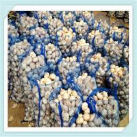 Wholesale Hot Sale Normal / Pure White China Garlic with Good Quality from china suppliers