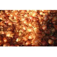 Wholesale 2cm - 5cm Yellow / Red Asian Shallots Round Containing Water , Sugar, spicy pure from china suppliers
