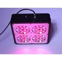 Wholesale High Efficiency Apollo Series Apollo 4 LED Grow Light 180W for Budding, Flower Blooming, from china suppliers