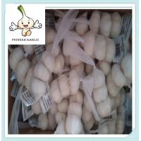 Wholesale new crop garlic fresh garlic 5.5cm normal white 3P packing for HAITI from china suppliers