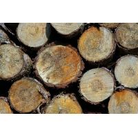Wholesale Nigeria Koso wood supplier from china suppliers