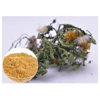 Flavones Dandelion Root Extract Powder For Diuretic Whole Herb Extraction