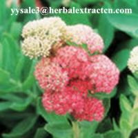 Wholesale Rhodiola Rosea P.E., Salidrosides 3%, CAS NO.:10338-51-9, Anti-aging, anti-anoxidant,, natural herbal extract, Yongyuan from china suppliers