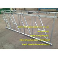Wholesale 3mm Thickness Dairy Farms Cattle Headlock For Cows With 4 Dairy Cows Locking from china suppliers