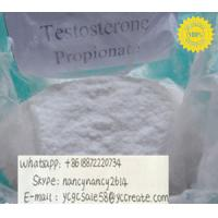 Wholesale Test Prop Testosterone Anabolic Steroid Testosterone Propionate CAS 57-85-2 from china suppliers