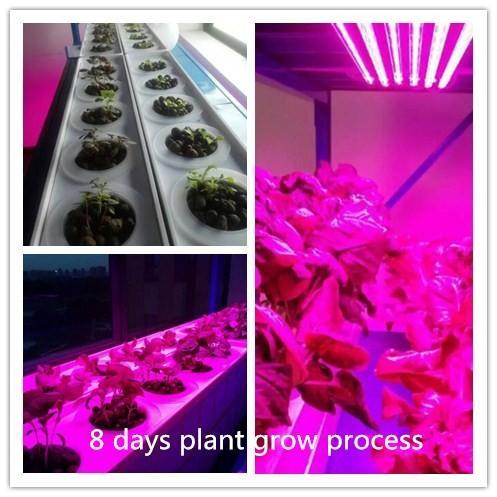 9:1-3:1 R B Ratio led strip plant grow lights for grow blooming
