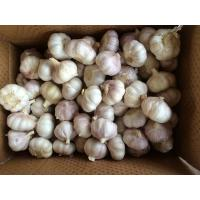 Wholesale Fresh Normal  White Garlic Best Qualty Competitive Price China from china suppliers