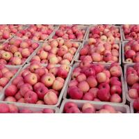 Wholesale Vitamins such as riboflavin, thiamin, and pyridoxine (vitamin B-6) good in tartaric acid Large Fuji Apple big and delici from china suppliers
