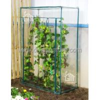 Wholesale Steel Tube Greenhouse-Tomato Series-100X50 X150CM-PVC from china suppliers