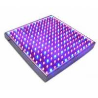 Wholesale 12W-3GS red, blue led hydroponic& Horticulture & greenhouse grow lights 120x62x62mm from china suppliers