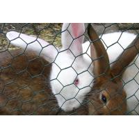 Wholesale Metallic Rabbit Wire Netting , Hot - Dip Galvanized Wire Mesh Fencing from china suppliers