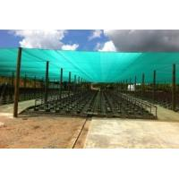Wholesale UV Blue Construction Safety Nets HDPE 8 Meters For Protection from china suppliers