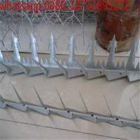Wholesale hot-dipped galvanized 200g/m2 wall spikers/ razor spikers/anti-climb fence wall spikers from 100% really factory from china suppliers