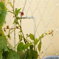 Wholesale Plant Climbing Prop Stainless Steel Cable Webnet / Green Wall from china suppliers