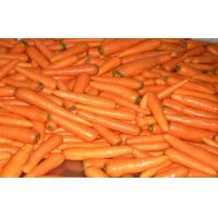 Wholesale Contains Minerals Fresh Organic Carrot Washed And Polished , Anti-Oxidants, Anti-cancer from china suppliers