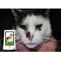 Wholesale Dogs Cats Pets Therapy Veterinary Laser Equipment , Veterinary Cold Laser Therapy Machine from china suppliers