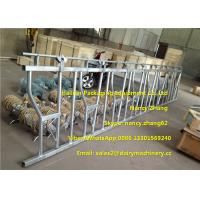 Wholesale Large Farm Equipment Dairy Cows Cattle Head Lock Locking And Feeding from china suppliers