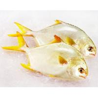 Wholesale China Supplied Frozen WR Golden Pompano Fish With 600-800g for African market. from china suppliers