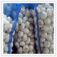 Wholesale new crop fresh pure white garlic Chinese Natural Garlic fresh garlic of 2015 from china suppliers