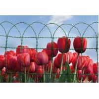 Wholesale Border Garden Fence, Border Wire Fencing,PVC-coated Garden Fence,Ornamental Border Fence from china suppliers