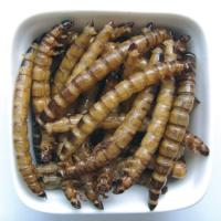 Wholesale Microwave dried superworm-Fish food from china suppliers