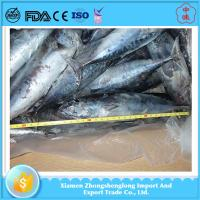 Quality Best Quality of Cheap Frozen Seafoood Whole Round Bonito Fish for Sale. for sale