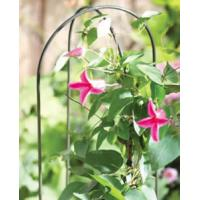hoops plant support for pink flowers