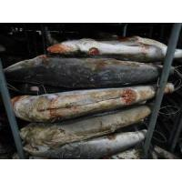 Wholesale Frozen Black Shark from china suppliers