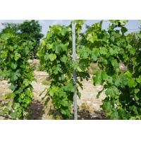Wholesale 2.4 Meter Galvanised Steel Vineyard Posts Metal Grape Pole Stakes Easily Assembled from china suppliers