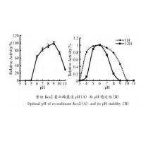 Wholesale Yeast Kex2 Protease Endoproteolytic Processing Of Recombinant Proalbumin Variants from china suppliers