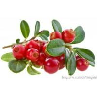 Wholesale Cranberry Extract Proanthocyanidins 25%; Anthocyanidins 25%; 4:1 naturl antioxidant export from china suppliers
