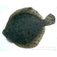 Quality Turbot Compound Feed for sale