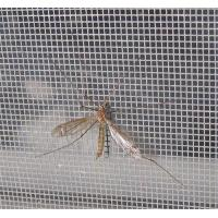 Wholesale agricultural insect net from china suppliers