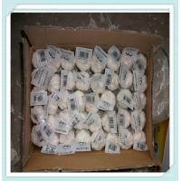 Wholesale China pure white fresh garlic in mesh bag Best quality new crop Chinese from china suppliers